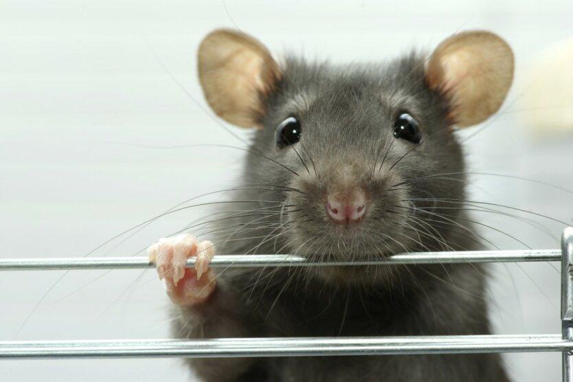 мышь0