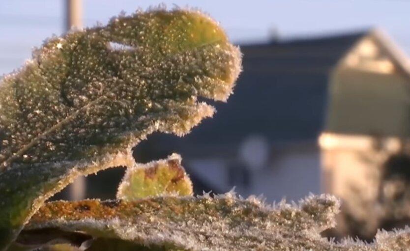 Заморозки, Украина
