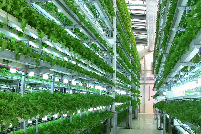 Вертикальные фермы 2