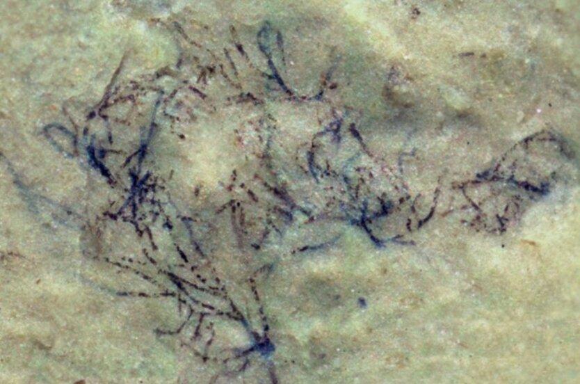 водоросль1