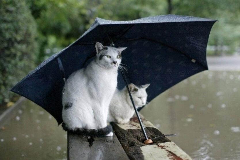 погода в украине, прогноз погоды