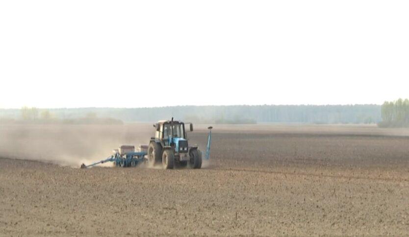 урожай, Украина, зерно, Минэкономики, коронавирус