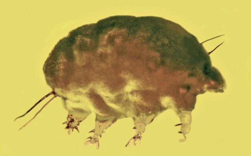 В янтаре обнаружили останки древнего животного