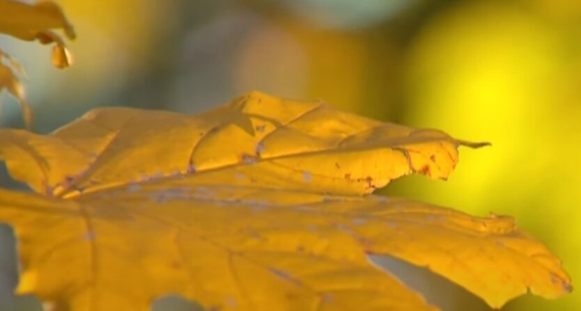 Осень, Украина, прогноз погоды