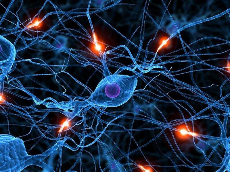 клетка мозга