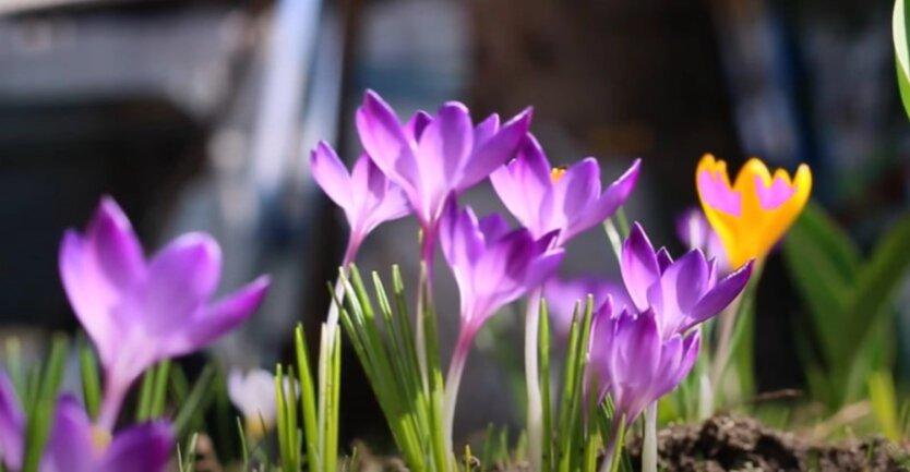 Погода весной
