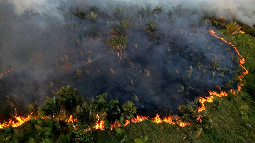 Амазонский лес_пожар