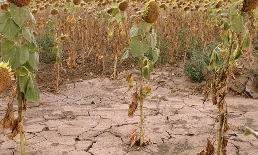 Засуха в Украине, погода летом в Украине, климат в Украине