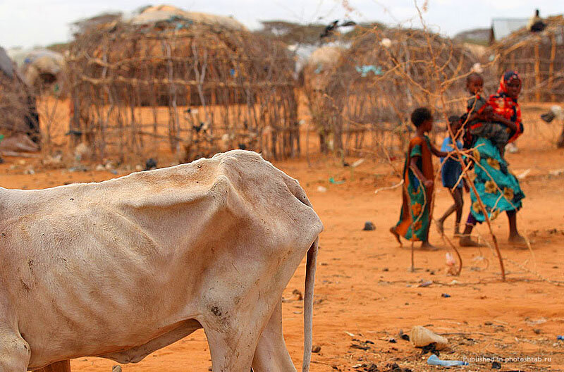 Корова Африка