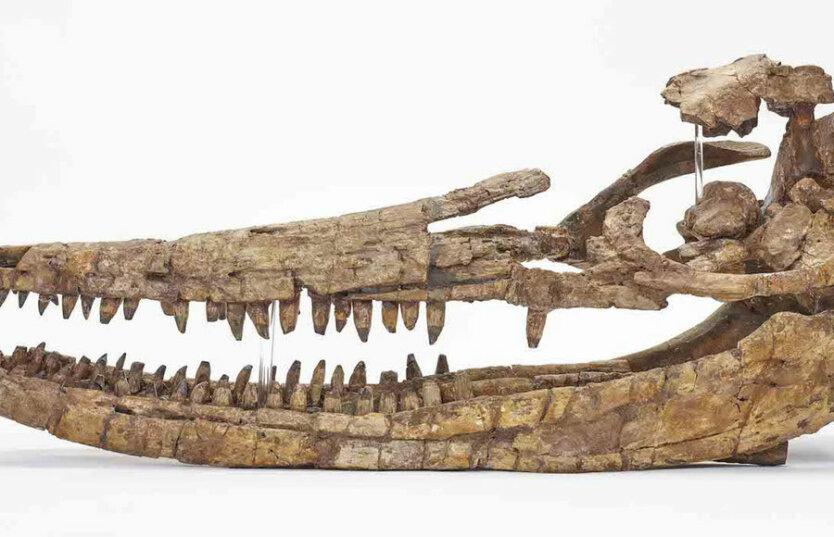 череп ихтиозавр