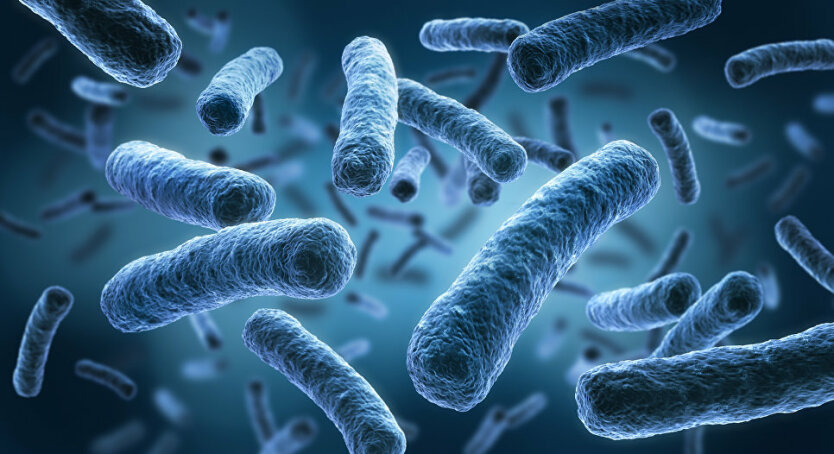 mikrobyi