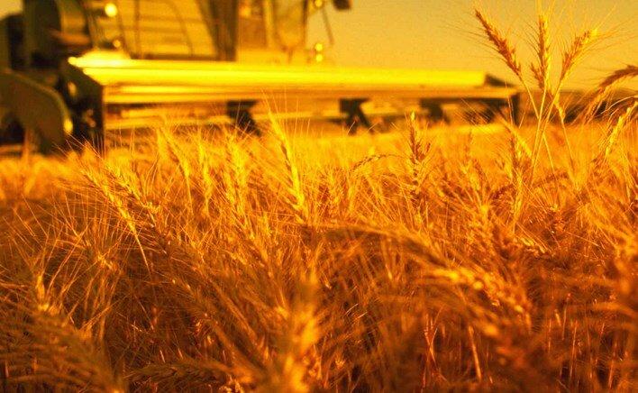 аграрри сельское хозяйство урожай зерно