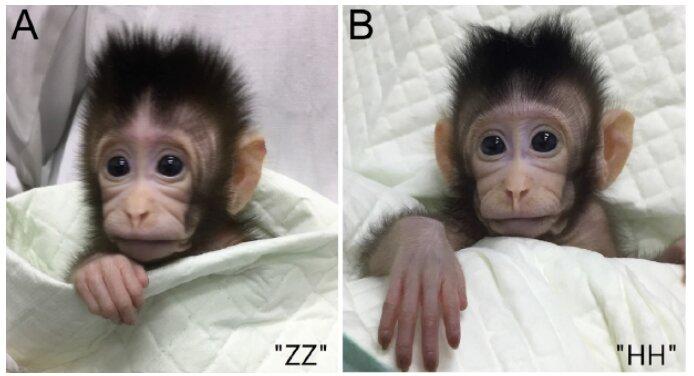 makaki-klon