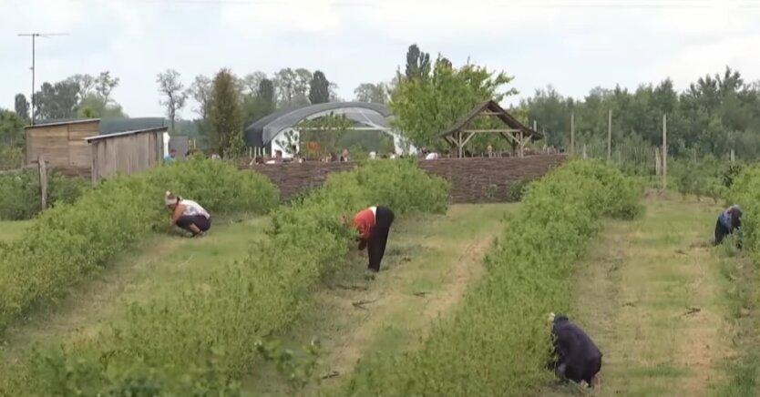 Украина, Польша, рабочие