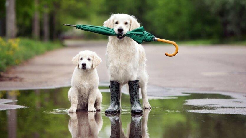Погода в Украине, прогноз погоды 14 апреля, Наталья Диденко