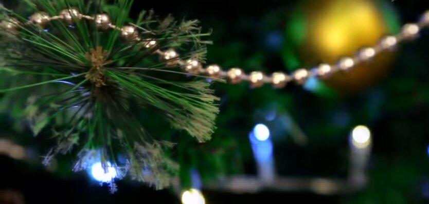 Новогодняя елка, Стоимость новогодней елки в Украине, Открытие елочных базаров