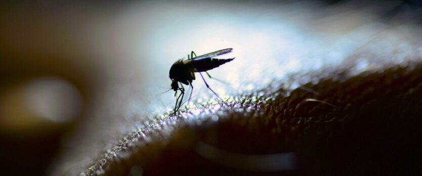 малярия комар лихорадка