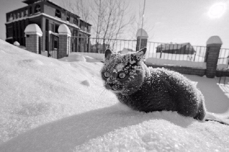 морозы кот зима холод