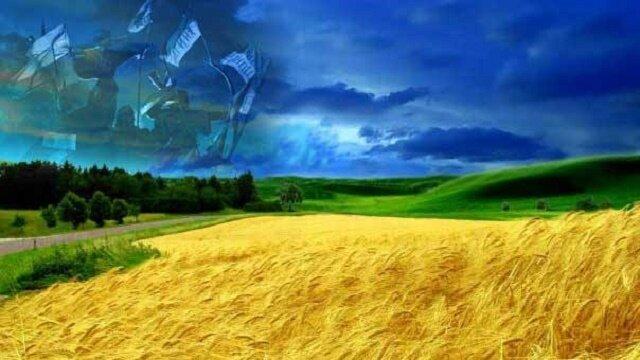 Украина_ жито