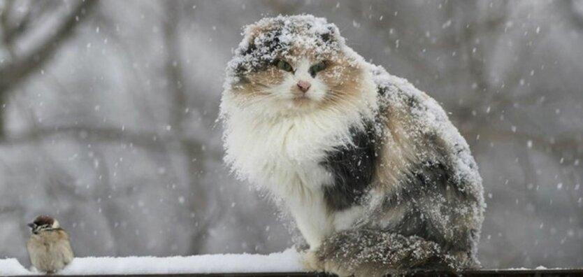 Погода в Украине, Наталья Диденко, снег и морозы