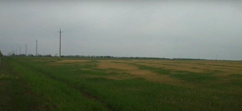 Засуха в Одесской области,гибель урожая в Одесской области,Максим Куцый,засуха в Украине
