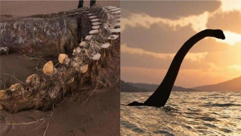 в шотландии на берег после шторма выбросило скелет неизвестного морского существа