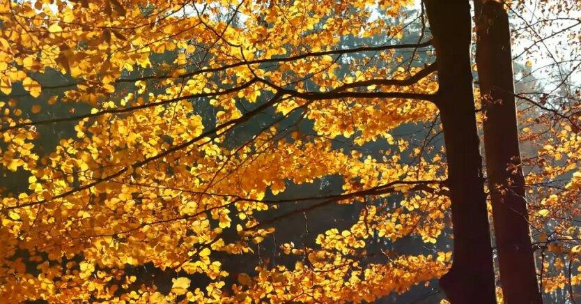 Погода в Украине, Теплая осень в Украине, Погода на четверг, Погода на 26 ноября