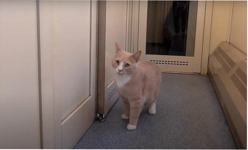 Перевозка животных в поездках, Как перевезти кота в поезде, Укрзализныця