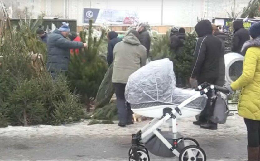 В Киеве стартовала официальная продажа новогодних елок: перечень адресов