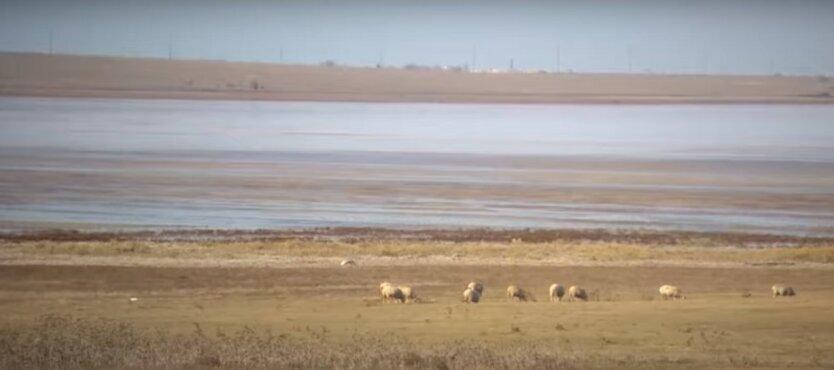 Анатолий Вассерман,Засуха в Крыму,нехватка пресной воды в Крыму,пресная вода из реки Кубань