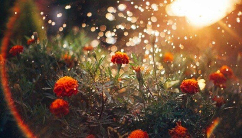 лето_ранняя осень