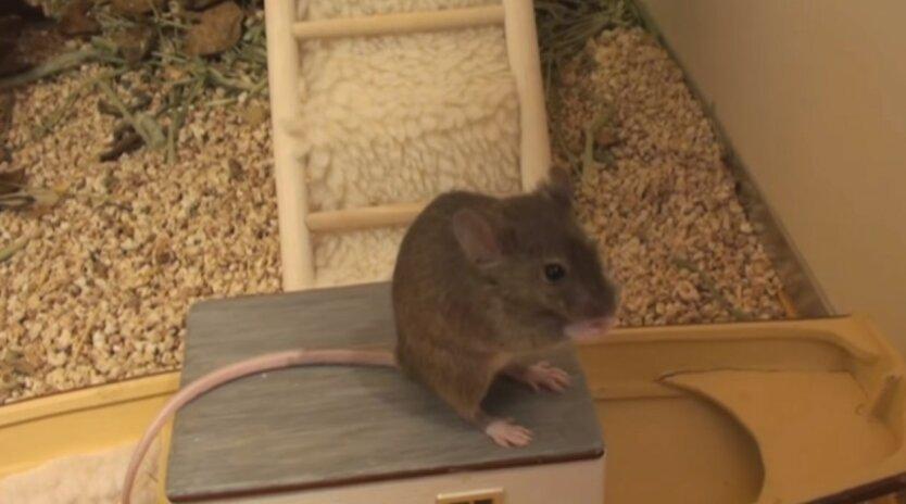 Одессит нашел мышей в овсянке,Домашние мыши,Домашние животные