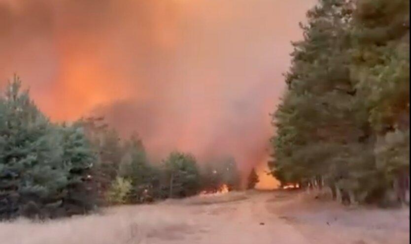 Лесные пожары в пригороде Воронежа россия