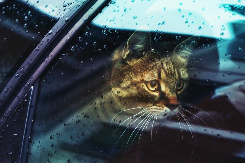 Погода в Украине, ГСЧС Украины, ухудшение погоды в Украине, туман, сильные дожди