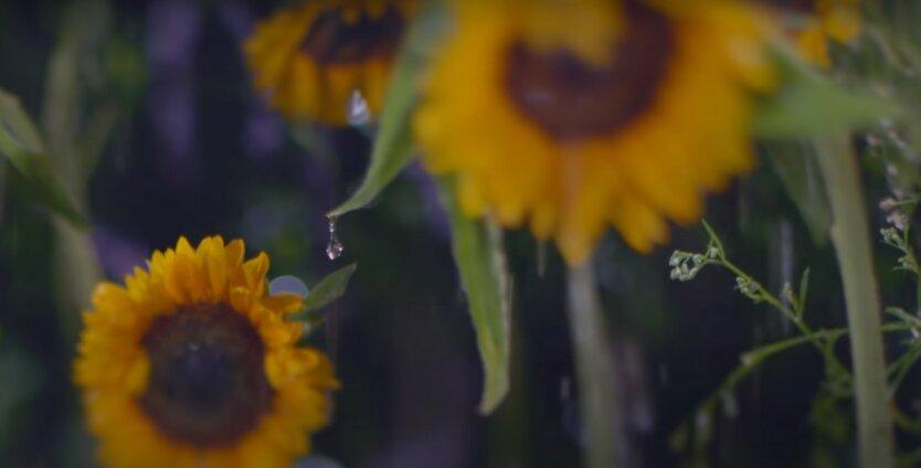 Погода в Украине,дожди в Украине,погода на вторник,погода на 14 июля,прогноз погоды