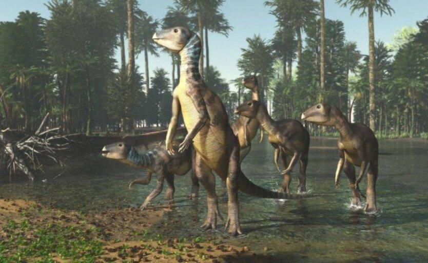 weewarrasaurus-reconstruction