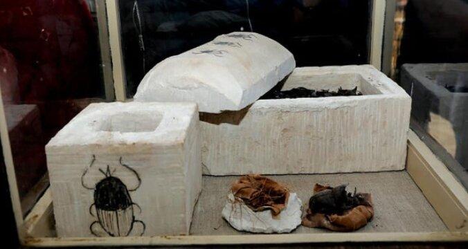 кошки мумии