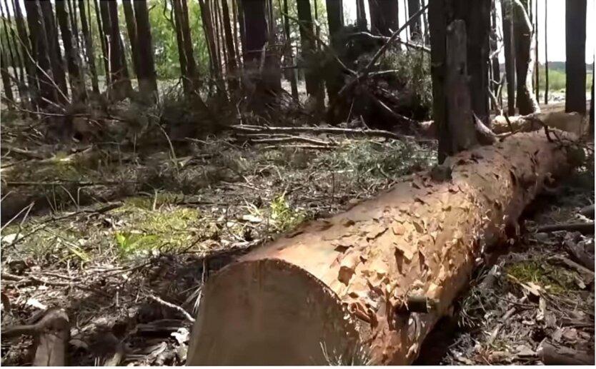 Вырубка леса в Украине, Василий Василитин, Незаконная вырубка леса