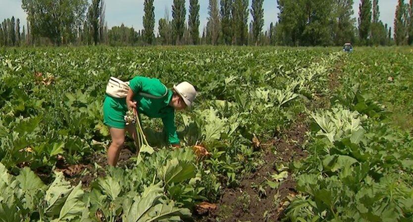 Рынок земли, продажа земли, Украина