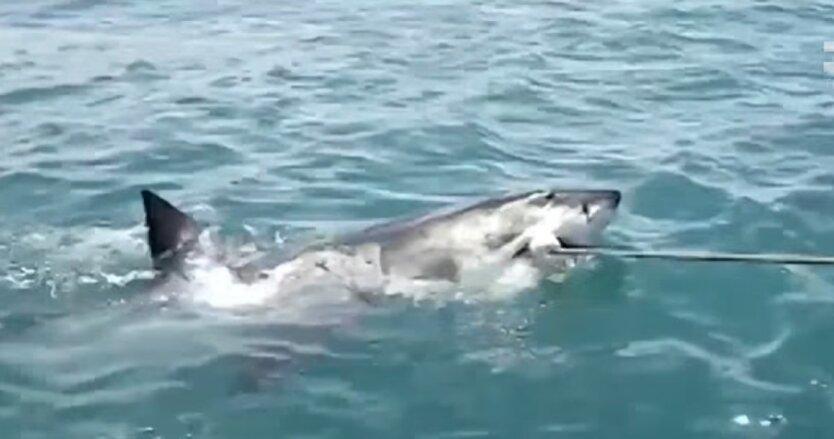 Нападение акулы, Египет, украинские туристы