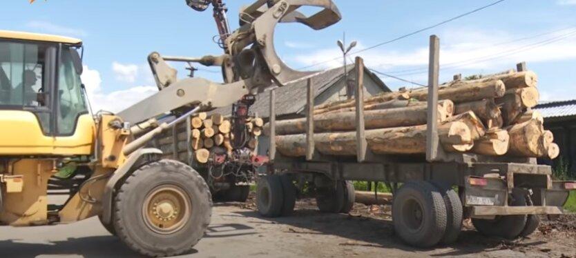 Мораторий на экспорт леса-кругляка