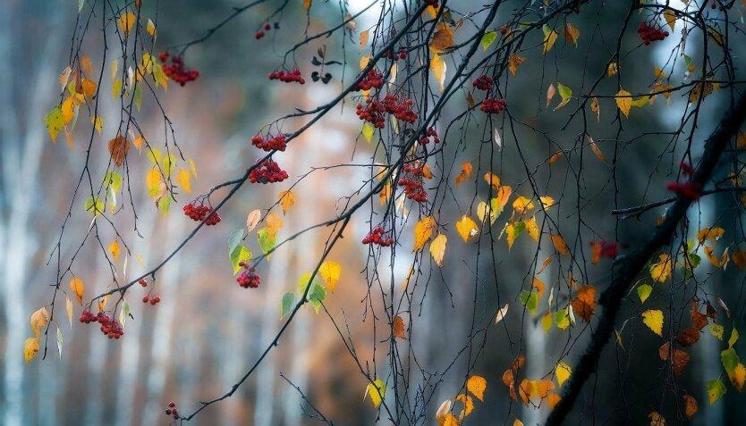 Дождь осенью