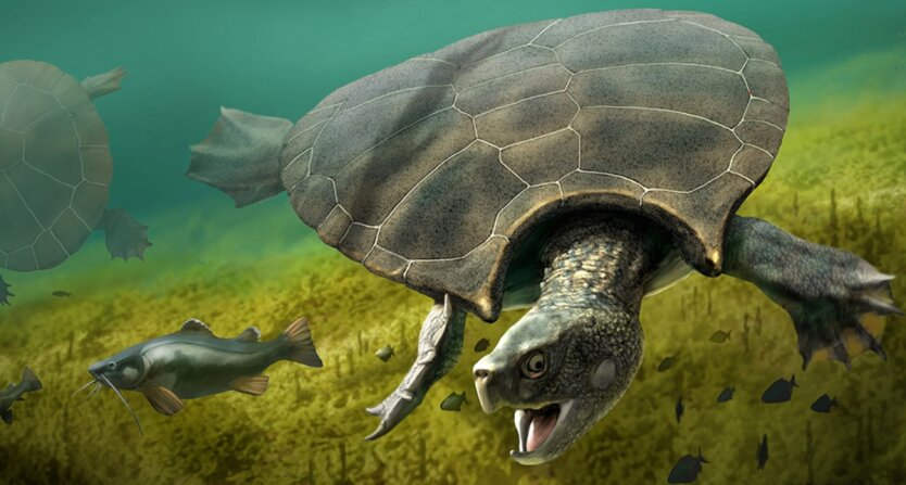 Stupendemys geographicus, древняя черепаха