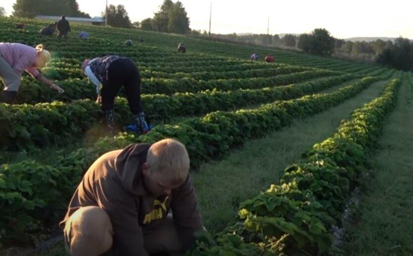 Украинский заробитчанин привез в Австрию коронавирус