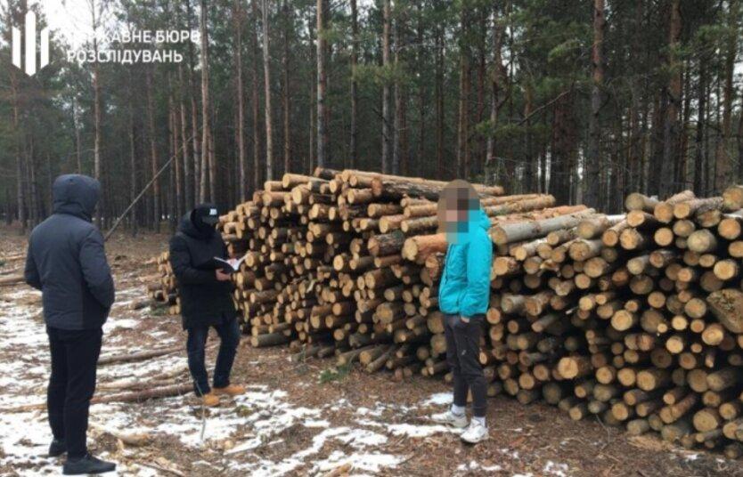обыски лес