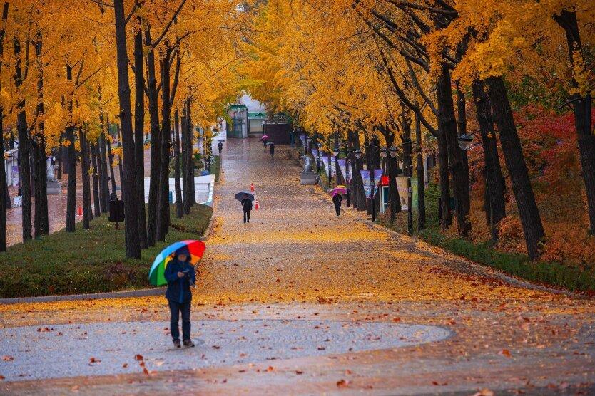 Погода в Украине, заморозки, Наталья Диденко