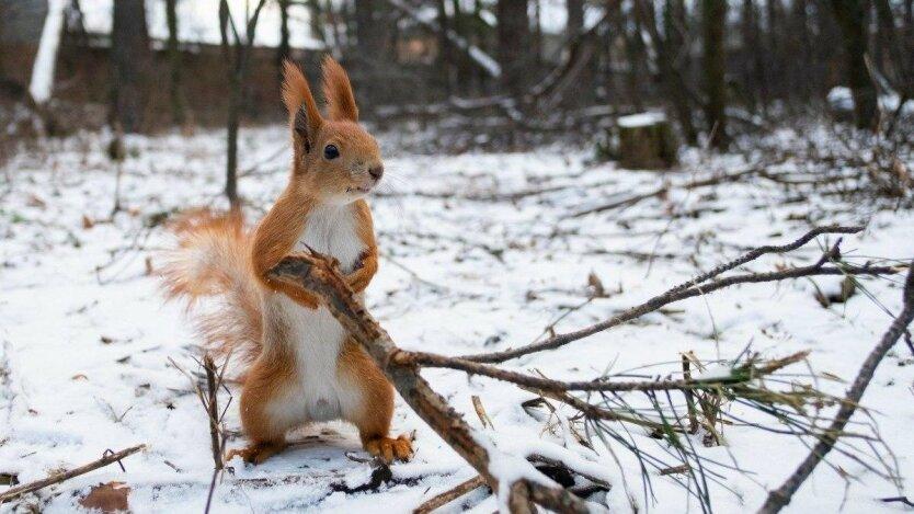 Погода в Украине, прогноз погоды, мороз