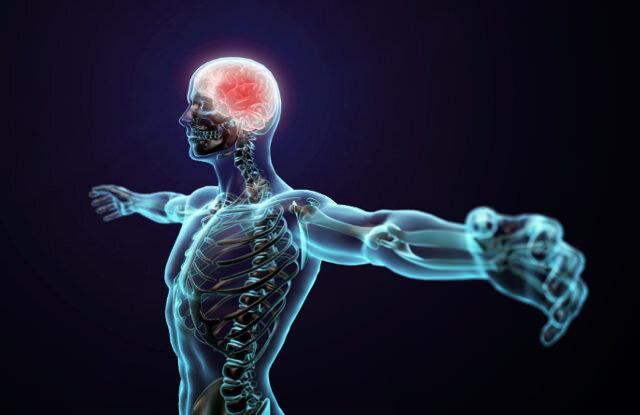 человек мозг тело мышцы позвоночник