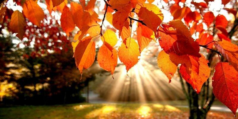 бабье лето осень парк солнце