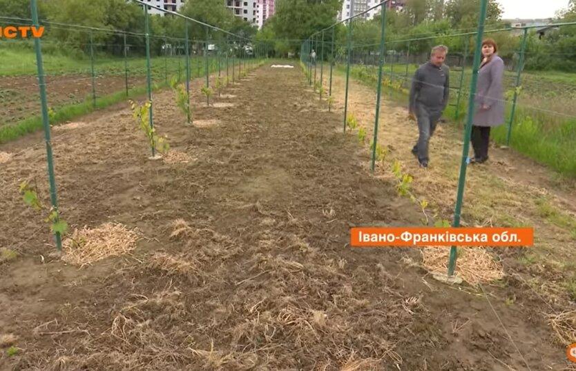 Урожай в Украине, прогноз, аграрии